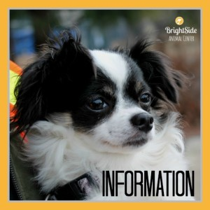 Brightside Information