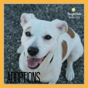 Brightside Adoptions